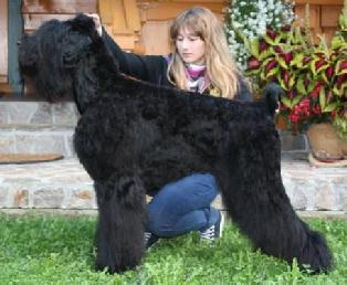 BLACK BALKAN LION GOSPOZHA UDACHA